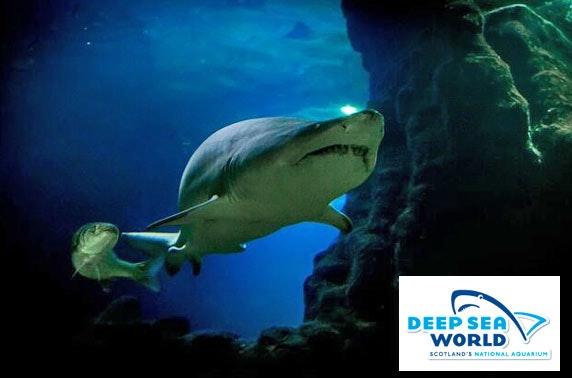 Deep Sea World adult shark encounter
