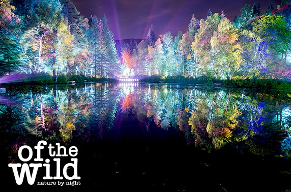 The Enchanted Forest 2018, Pitlochry