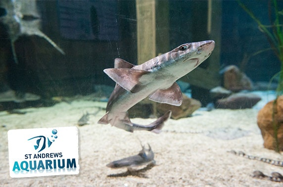 St Andrews Aquarium 3-month family pass