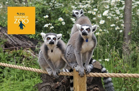 Edinburgh Zoo tickets - valid 7 days
