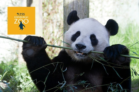 Edinburgh Zoo tickets, Easter holidays