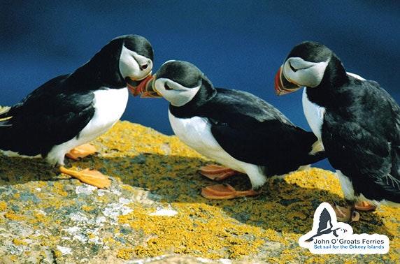 Wildlife cruise with John O' Groats Ferries