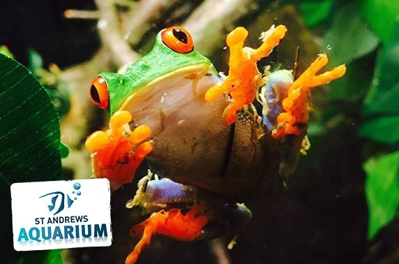 St Andrews Aquarium family pass & feeding experiences