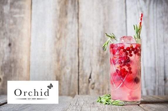 Gin tasting at Orchid Aberdeen