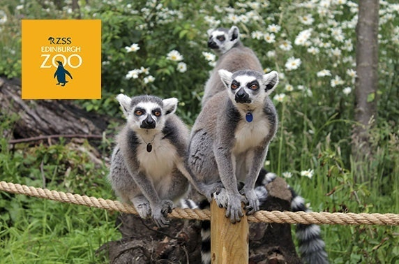 Edinburgh Zoo After Hours – adults only!
