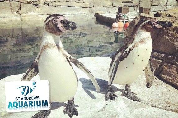 Adopt a meerkat, seal or penguin with St Andrews Aquarium