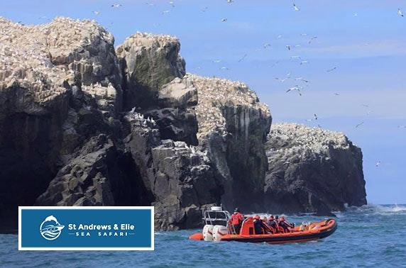 Elie Sea Safari, East Neuk